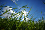 Vergelijk hier grasmaaiers!